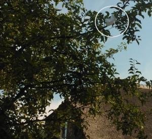 Gisteravond tussen 9 en 10 schoot iemand verderop de dijk minimaal 5 lichtkogels af, de wind blies ze telkens strak richting ons dak! Ik heb daardoor niet zo heel lekker geslapen.. De volgende morgen een parachute van zo'n flare in de appelboom aangetroffen, enkele meters naast de rieten kap! Gebruik van noodsignalen zonder nood is sowieso strafbaar, maar wat een stelletje @&#*!! zeg om er onnodig zoveel af te schieten midden in de zomer met harde wind!