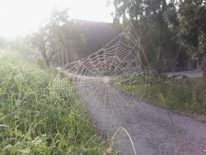 Beetje mistig, dauw op de spinnenwielen.. prachtig!